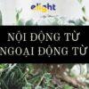 Nội Động Từ và Ngoại Động Từ trong tiếng Anh