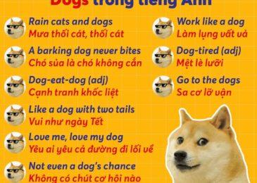"""15 Thành Ngữ Tiếng Anh với từ """"Dog"""" Phổ Biến và Thú Vị!"""