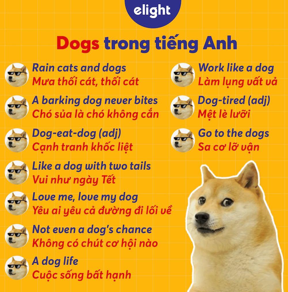 thành ngữ tiếng Anh với từ dog