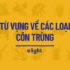 Nắm vững 20 từ vựng về côn trùng trong tiếng Anh