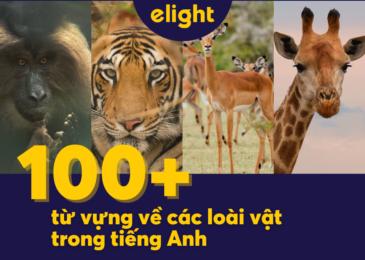 Tổng hợp 100+ từ vựng về các loài vật trong tiếng Anh